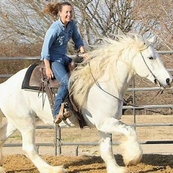 15.2HH ,7 Yrs Old Gray & White Tobiano Mare Gypsy Vanner For Sale