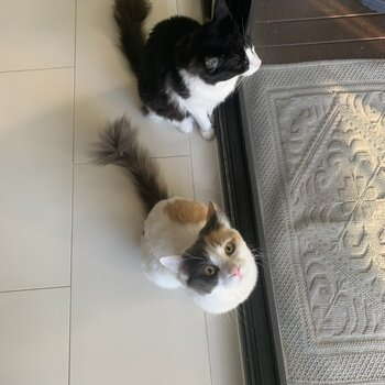 Male and Female from same litter