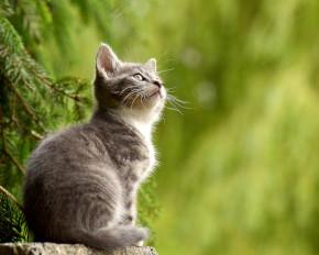 Cat Kennels Australia