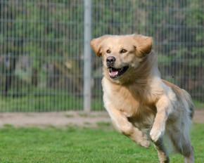 Dog Kennels Australia