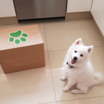 Dog and Cat food delivery